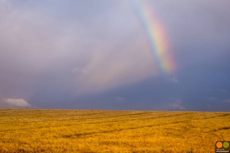 wheat-field-with-rainbow_20210545625_o